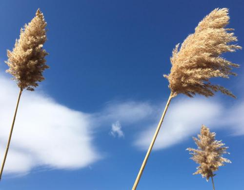 Blowing in the Wind, Potsdam, NY